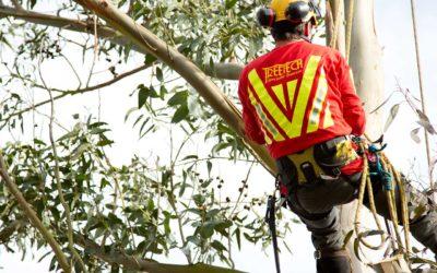 Introducing Treetech