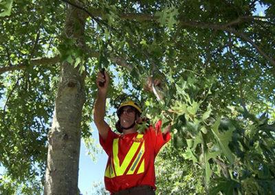 Residential-pruning